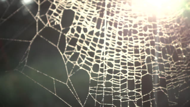 beautiful spider web at sunset - spider web stock videos & royalty-free footage