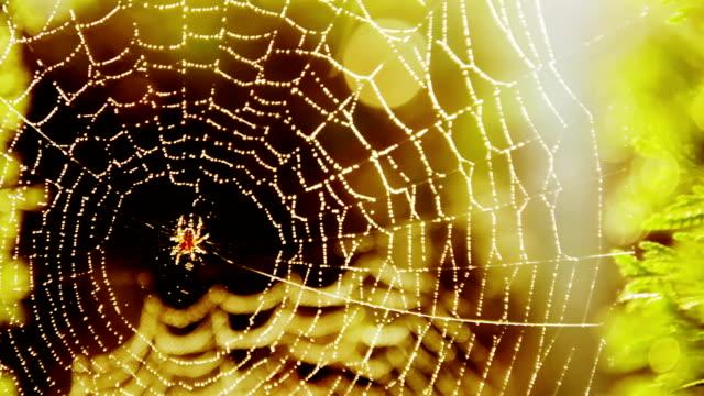 vidéos et rushes de belle toile d'araignée avec reflet d'objectif - attraper