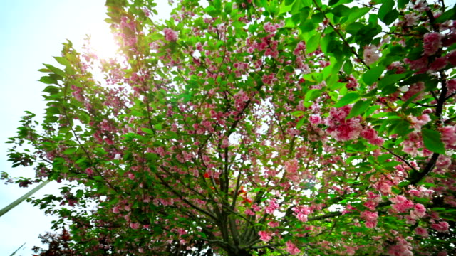 beautiful spring scene with leaves falling from tree cynthia rhododendron - rhododendron stock videos and b-roll footage