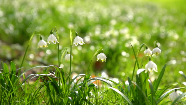 hd super slow-mo: beautiful spring snowflakes - grass family stock videos & royalty-free footage