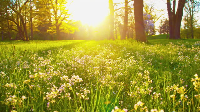 ds beautiful springtime - parque natural stock videos and b-roll footage
