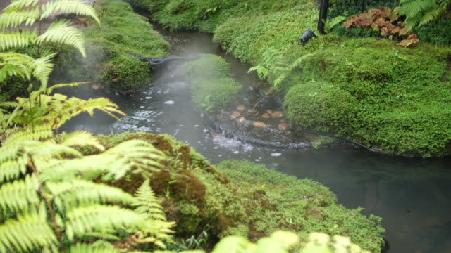 vídeos de stock e filmes b-roll de beautiful stream in the forest - abeto