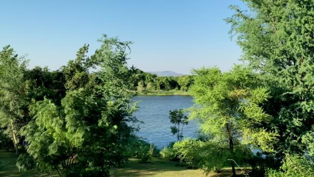 アフリカのローワーザンベジ川に近い美しい夏の日 - ネイチャーズウィンドウ点の映像素材/bロール