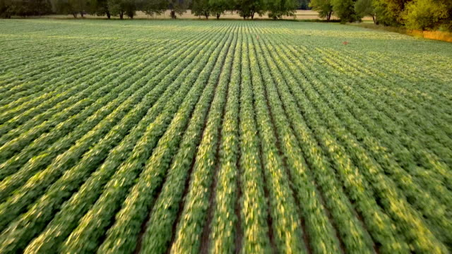vídeos de stock e filmes b-roll de beautiful summertime sunset aerial footage of the michigan farm land - agricultura