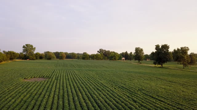 beautiful summertime sunset aerial footage of the michigan farm land - pasture stock videos & royalty-free footage