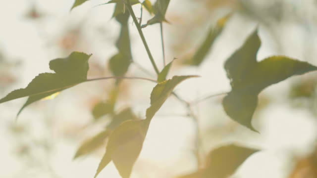 beautiful sun green leaves - blurred motion stock videos & royalty-free footage