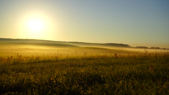 beautiful sunrise in a foggy autumn day - polder stock videos and b-roll footage