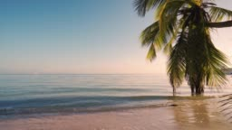 Beautiful sunrise over the tropical beach and exotic palm tree