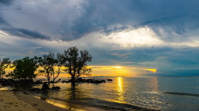 美しい夕日と劇的な空、タイムラプス ビデオとビーチでマングローブの木 - 夏休み点の映像素材/bロール