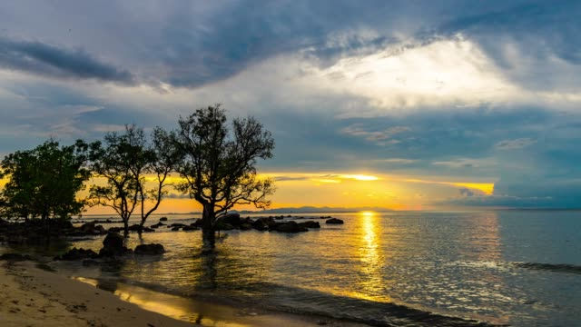 Beautiful Sunset and Mangrove Tree on Beach with Dramatic Sly, Time Lapse Video