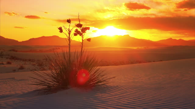vídeos de stock, filmes e b-roll de a beautiful sunset cinemagraph and timelapse of a yucca plant on the sand dunes at white sands national monument in new mexico, seamless loop - novo méxico