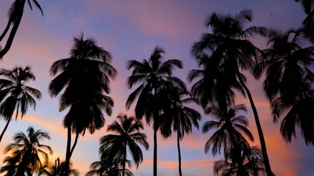 beautiful sunset in riohacha - colombia - palm leaf stock videos & royalty-free footage