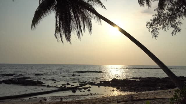Beautiful sunset on the beach and sea with coconut palm tree