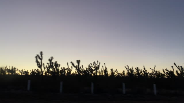 beautiful sunset on the highway - cactus silhouette stock videos & royalty-free footage