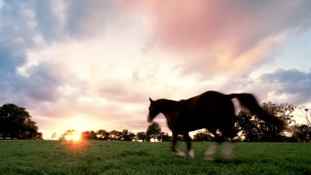 beautiful sunset over a lush green pasture, a horse gallops into distance. - arkansas stock videos & royalty-free footage