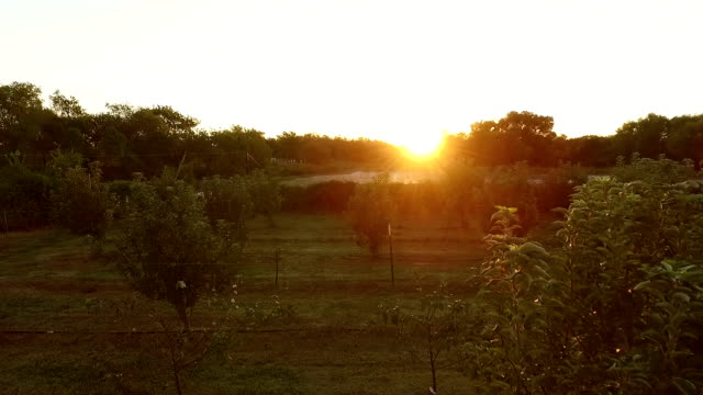 Beautiful sunset over a small lake and apple orchard