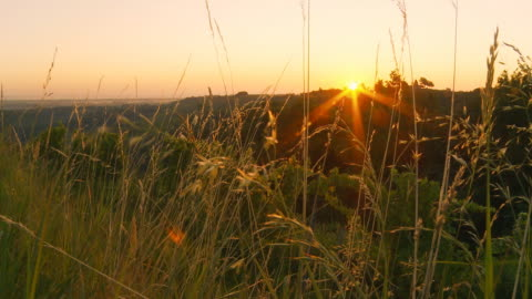 vídeos y material grabado en eventos de stock de dolly hd: hermosa puesta de sol sobre campo - hierba familia de la hierba