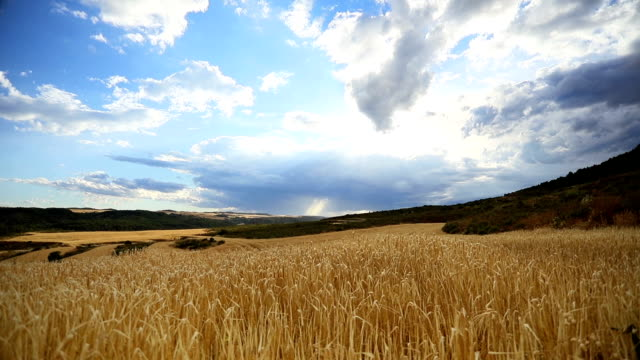 beautiful sunset sky over golden field of wheat. time-lapse. - hay stock videos and b-roll footage