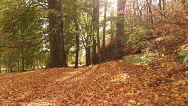 a beautiful swedish forest in autumn - november stock videos & royalty-free footage