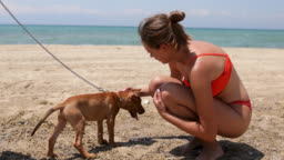 Beautiful teenage girl with her dog on beach. Empty beach early in the morning just for girl and her cute little dog