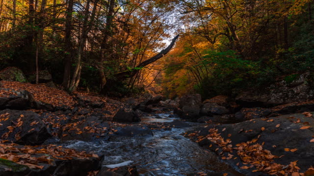 Beautiful time lapse sequence showing the autumn colours in the New River Gorge National Park.