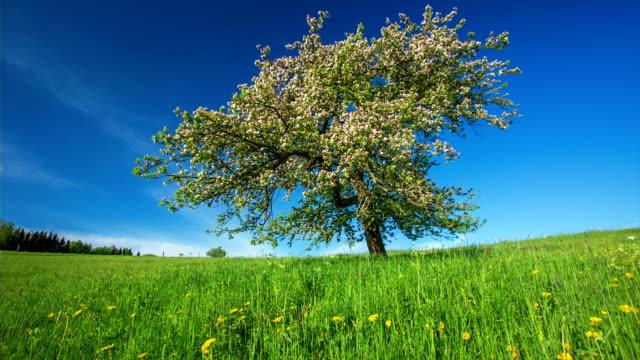 CRANE UP: Beautiful Tree at Spring Time