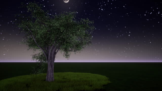 beautiful tree in of the loop - fast motion stock videos & royalty-free footage