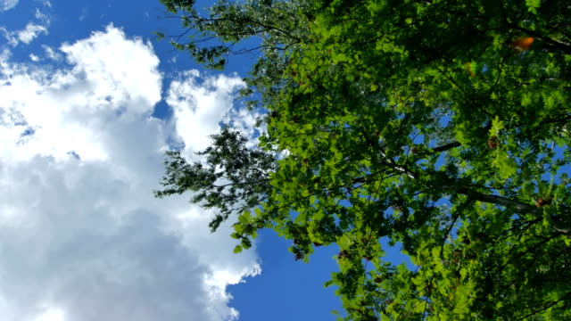 春グリーン ライフ放射日光を浴びて紅葉が美しい木。