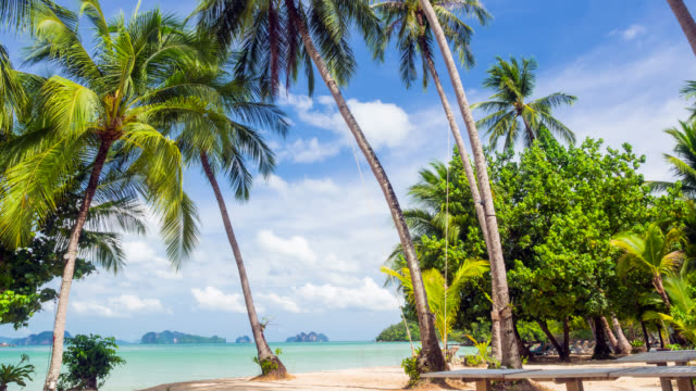 beautiful tropical beach and coconut palm tree - tropical tree stock videos & royalty-free footage