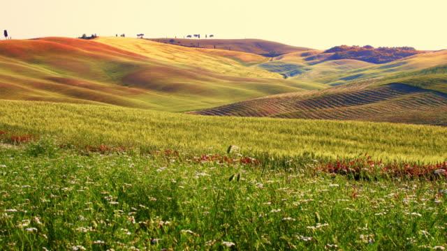 ds 美しいトスカーナの田園風景 - 草地点の映像素材/bロール
