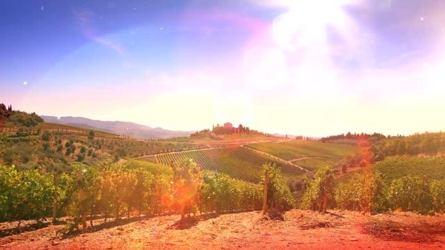 Herrliche toskanische Sommer Vineyard. HALBTAGESAUSFLUG