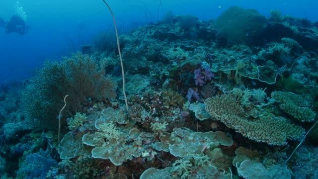vackra undervattenskabeln korallrev - dykarperspektiv bildbanksvideor och videomaterial från bakom kulisserna