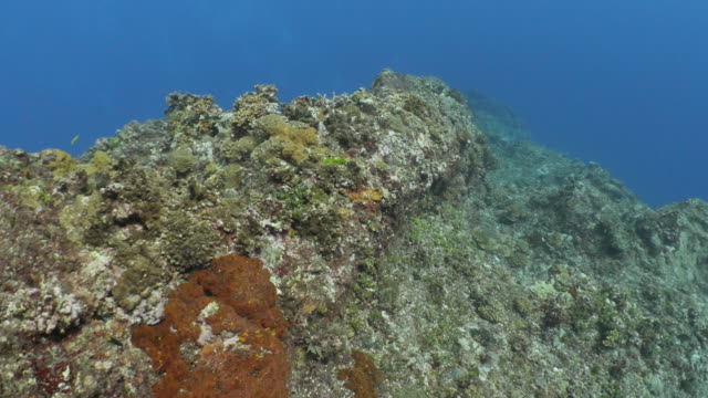 beautiful undersea pinnacle, coral colony, orchid island, taiwan - philippine sea stock videos & royalty-free footage