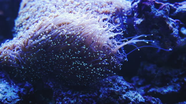 beautiful underwater abstract background. - sea anemone stock videos and b-roll footage