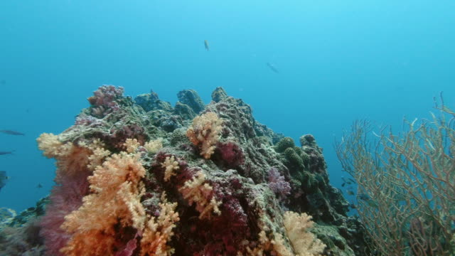 beautiful underwater coral reef teaming with tropical fish and healthy coral - gorgonian coral stock videos & royalty-free footage