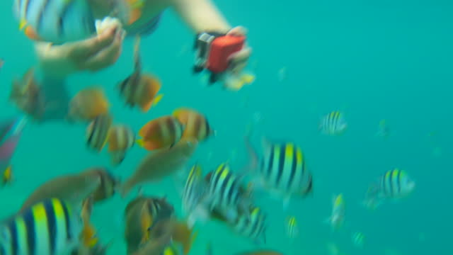 Beautiful underwater footage of a girl swimming between colorful fishes doing snorkel in the ocean of the Indonesian close to Gili islands during travel vacations.