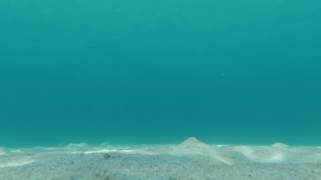 vidéos et rushes de beau paysage sous-marin avec du poisson et de l'anémone - vidéo de fond - vacances - partie du corps d'un animal