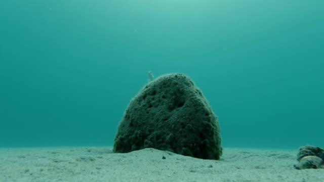 vidéos et rushes de beautiful underwater landscape with rock and fish - vidéo de fond - vacances - fonds marins