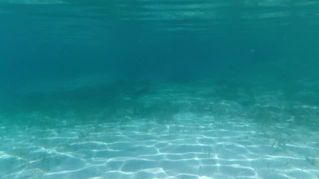 beautiful underwater landscape with school of fish fish - background video - vacation - seabed stock videos & royalty-free footage