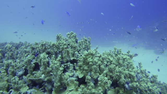 Beautiful underwater scene