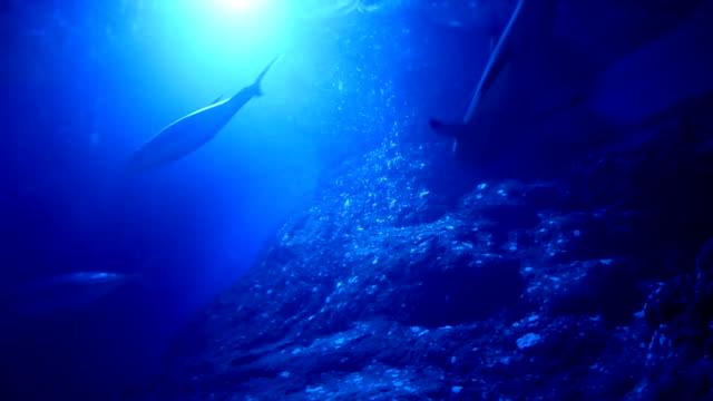 Belle vue sous-marine