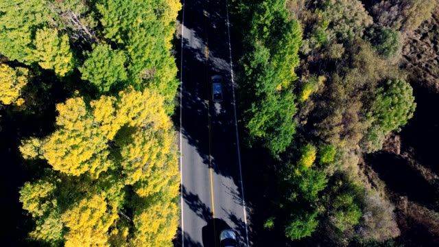 beautiful vertical look down drone shot following a car on a lonesome road in the california mountains as the trees are changing colors. - mammoth lakes video stock e b–roll