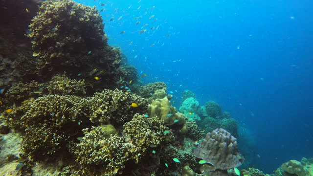 beautiful vibrant color of fish and coral undersea - coral stock videos & royalty-free footage