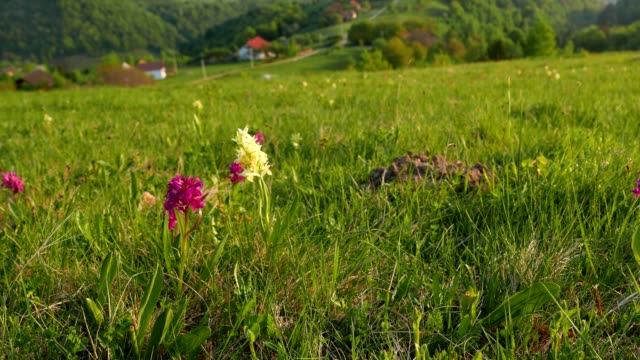 beautiful view in transylvania, from high mountain fields with flowers, hey stacks in front, a slow lateral dolly motion - transylvania stock videos & royalty-free footage