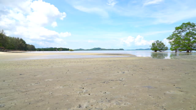 beautiful view mangroves forest beach - tide stock videos & royalty-free footage