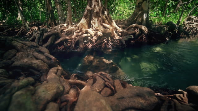 beautiful view of the crystal clear stream flow pass the root of tree in the forest - krabi province stock videos & royalty-free footage