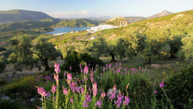 beautiful view of the rolling andalucia countryside with the town of zahara de la sierra in the distance, spain, europe - andalucia stock videos & royalty-free footage