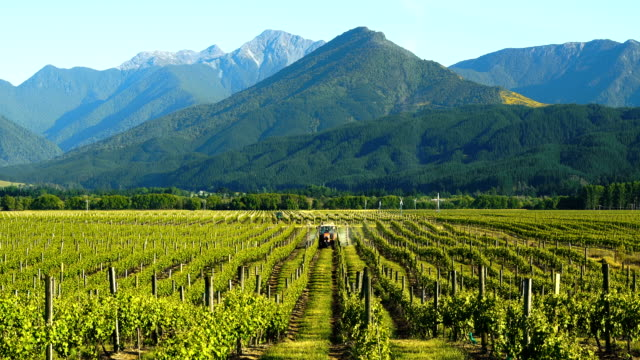 beautiful vineyard. - mountain range stock videos & royalty-free footage