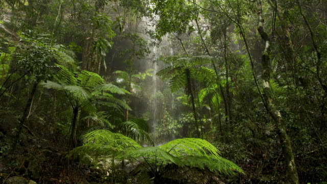 vidéos et rushes de belle chute d'eau dans la forêt tropicale australienne - tropical