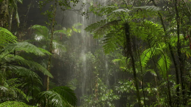 beautiful waterfall in australian rainforest - canyon stock videos & royalty-free footage